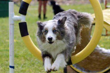 Crocchette per Cani ad Alta Energia